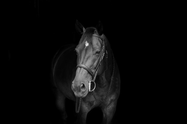 Struck Horse